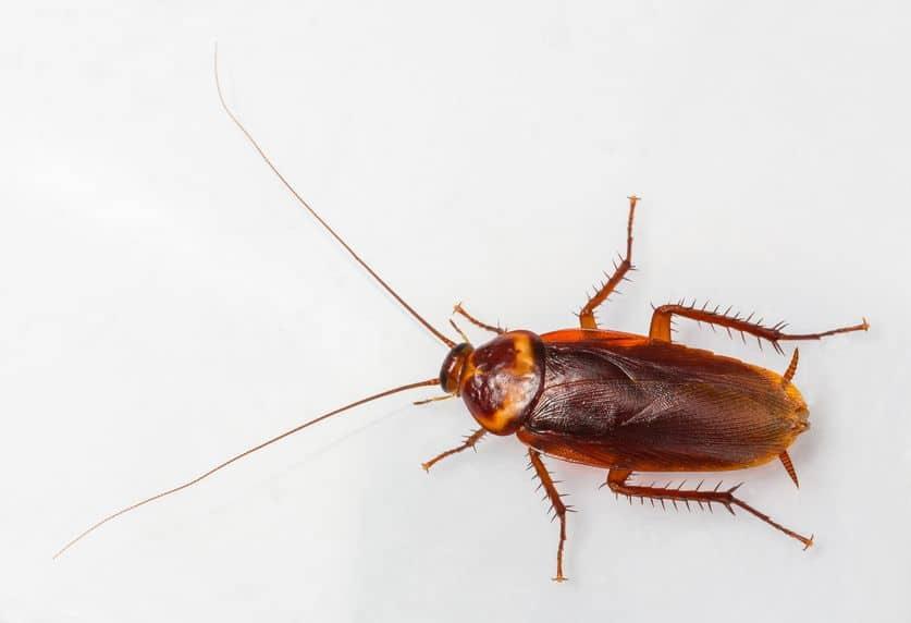 palmetto bug pest control Florida
