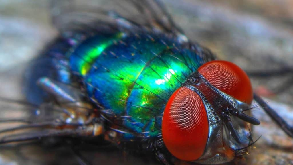 get rid of filth flies in your business